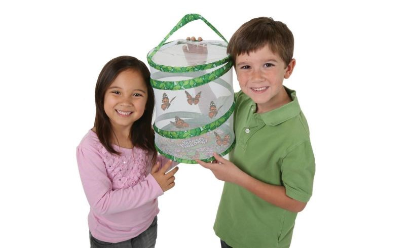 The Live Butterfly Garden - grow your own butterflies at home!